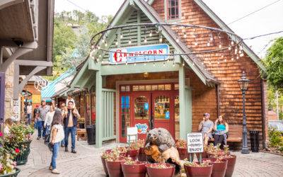 5 Reasons Our Gatlinburg Smoky Mountain Tours Should Be On Your Bucket List